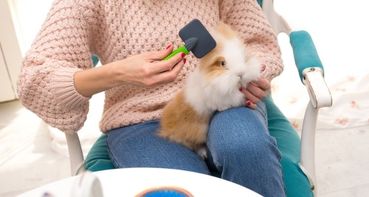 bunny grooming
