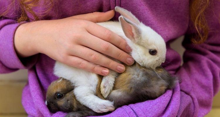 bunny information