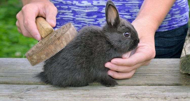 how do you groom a rabbit