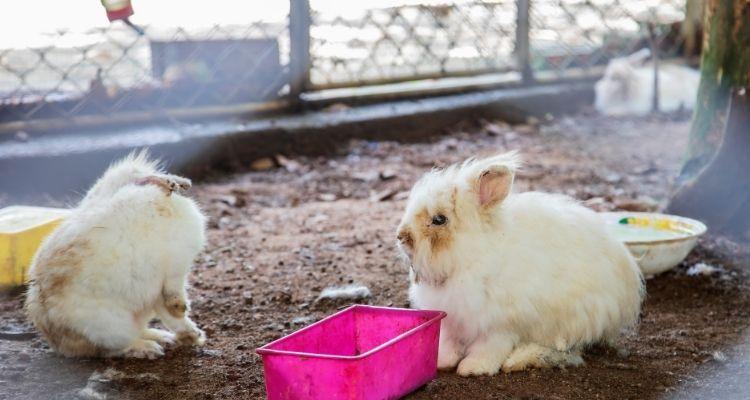 how to give a bunny a bath