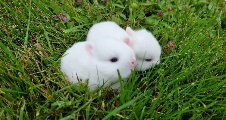 at what age can baby rabbits eat food