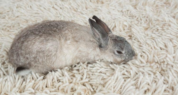 bunny gi stasis