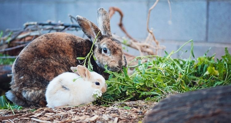 can rabbits recover from gi stasis