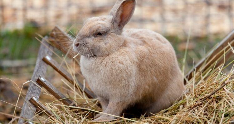 gi stasis for rabbits