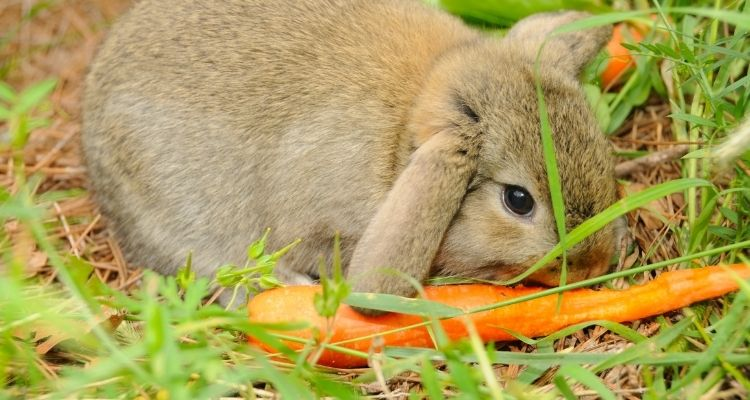 What foods can rabbits eat list
