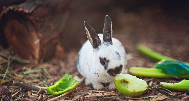 what food can rabbits eat