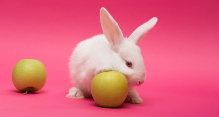 what human food can rabbits eat