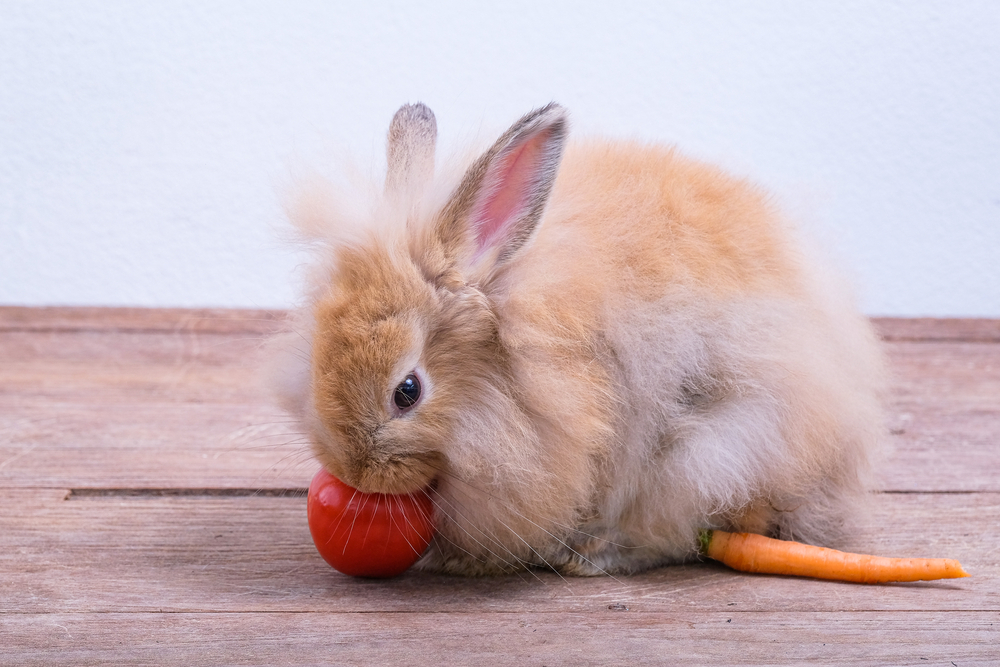 can rabbits eat tomato leaves