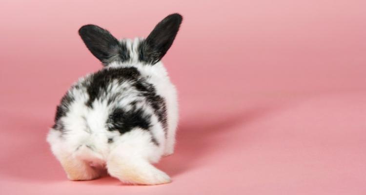 rabbit litter pellets