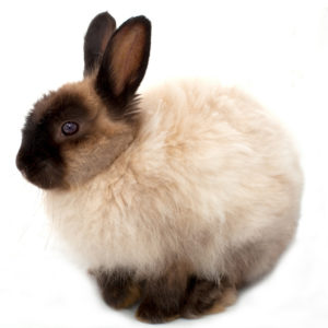 cage for angora rabbit